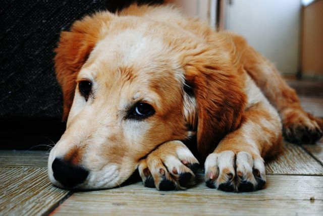 geriausi šunų prekybos rodikliai populiariausios prekybos strategijos