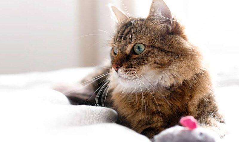 širdies sveikatai galvok katė diabeto ir hipertenzijos vaistai